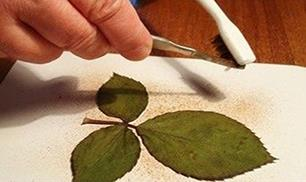 Great Leaf DIY
