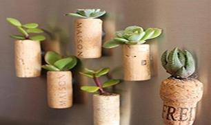 Diy Cute Cork Succulents