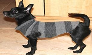 DIY Dog Sweater from a Used Sweater